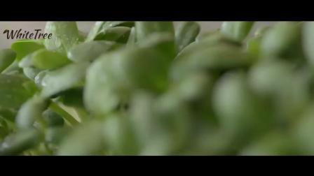 如何DIY葵花籽芽菜