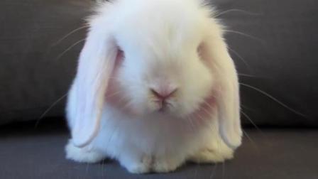 小兔兔自己洗脸洗脚这么可爱, 萌死人了!