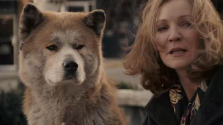 2分钟看完温情片《忠犬八公的故事》