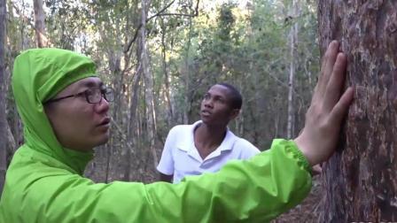 在奇林地 见到了猴面包树的爸爸 72