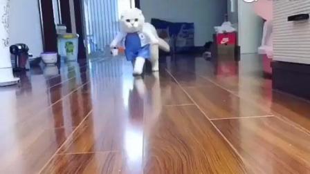 性感小猫咪护士装出诊, 看看这小猫步走的