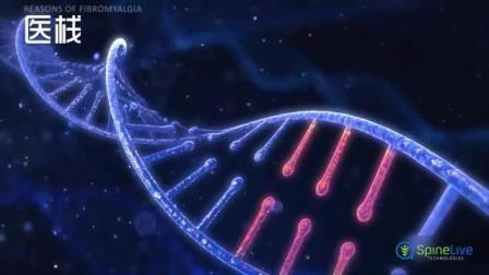 15-动画演示|纤维肌痛综合征的病因
