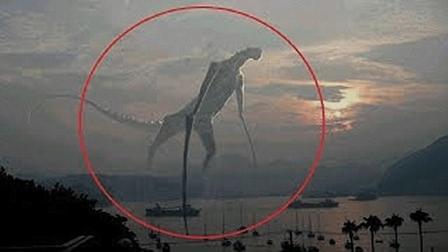 不可思议的4个地球未知的神秘生物, 真实存在, 科学至今无法解释