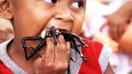 这里蜘蛛泛滥, 人们以蜘蛛为食油炸后嘎嘣脆, 成为当地知名美食
