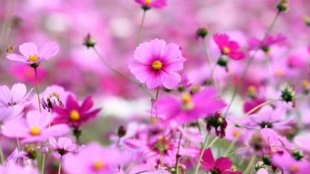 7月30日 早上好! 睡醒了吗 清晨送你一首美美的情歌 愿幸福与你永相随!