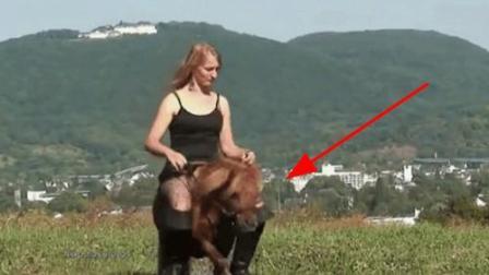 国外大美妞骑矮马, 这场面让马好尴尬