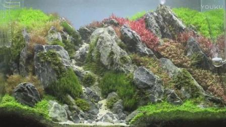 """家居水景丨2017年泰国水草造景比赛""""Rotala Field""""作品欣赏"""