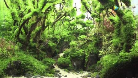 """家居水景丨2017年泰国水草造景比赛""""River Flows in You""""作品欣赏"""