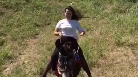 姑娘不要这么激动, 不过你这骑驴的技术看起来还不错哦