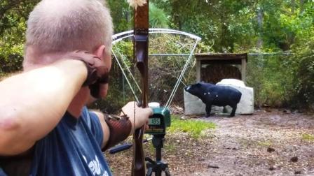 美猎: 黑尾巴精英vl箭速测试(装备测评之美洲传统弓)