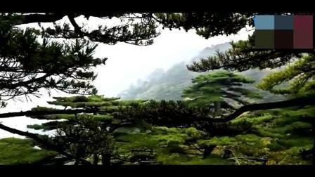 旅游攻略: 黄山旅游 雄伟挺拔 肃然起敬之美