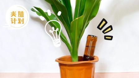 学会这两招 出去玩家里的植物也不怕没人浇水啦 75