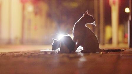 上海男人每晚喂养300只流浪猫,坚持8年风雨无阻