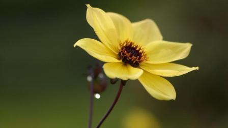 木棉花的春天主题曲《花开花落》这首歌曾唱哭多少人, 经典超级好听!