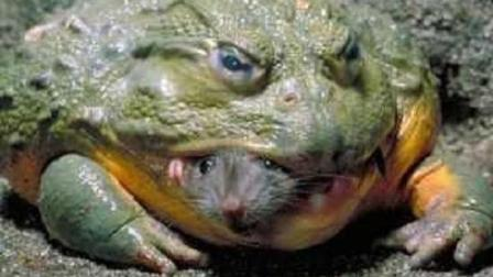 大批牛蛙现身武汉公园 专家: 可做成佳肴吃掉