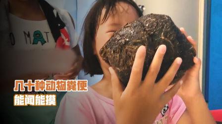 日本动物园举办动物粪便展览: 能闻还能摸!