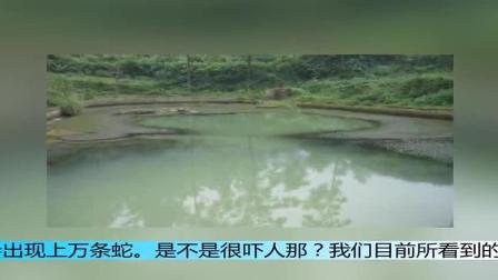 """重庆秀山神秘""""死湖""""一夜之间惊现上万条蛇, 专家的话让我们更加害怕"""