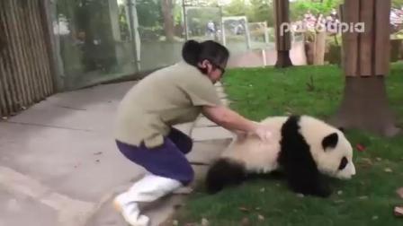 太逗了! 美女饲养员智斗熊猫宝宝