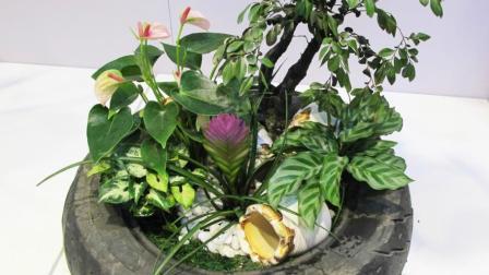 这些漂亮的盆栽, 你养的出来吗