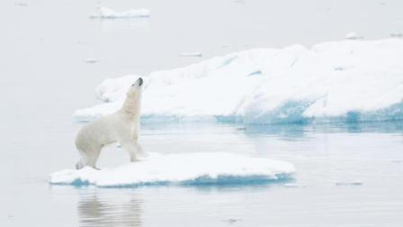 这是一部严肃的北极熊纪录片 86