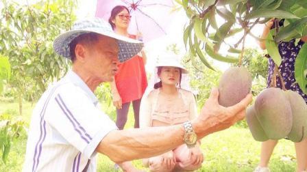 这是一种少见的芒果品种, 价格昂贵上流社会经常吃