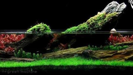 英国一位水族箱造景大师James Findley的水族箱景观作品