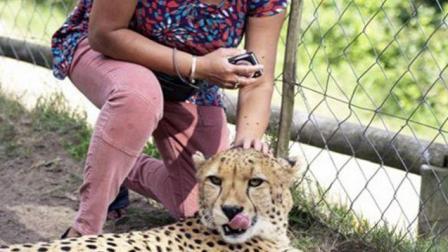 女子被猎豹袭击, 老公就在旁边拍照,