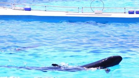 冲绳美丽海水族馆 海豚表演