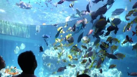 在这里看鲸鲨畅游--冲绳美丽海水族馆