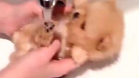给小狗洗个澡, 小不点的, 萌死了