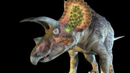6000万年以前的三角龙骨,