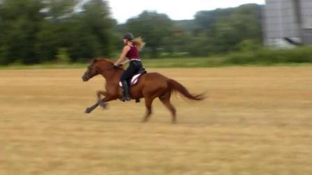 世界上跑的最快的马 一秒19米, 比跑车还要快