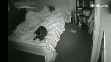 诡异! 主人在卧室里睡觉, 突然狗狗发现了不对劲的事!