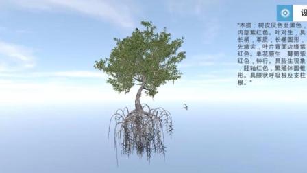 厦门大学红树林教育生态环境