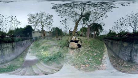 Panda VR UNDP China