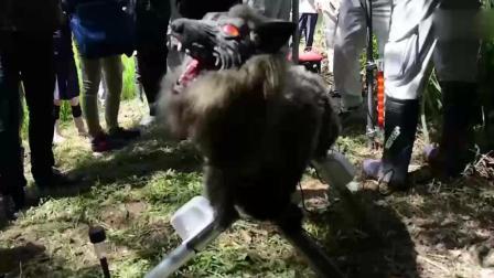 稻草人也要高科技? 日本发明超级机器狼保卫农田