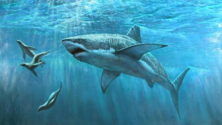 【牛叔】一部经典巨兽电影《大白鲨》