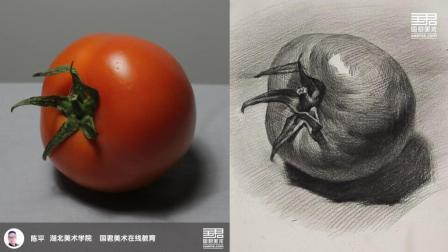 「国君美术」 素描静物_单体_西红柿_陈平