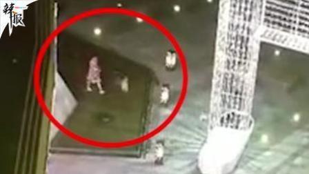 女孩喷泉遛狗触电身亡 家长施救也被电