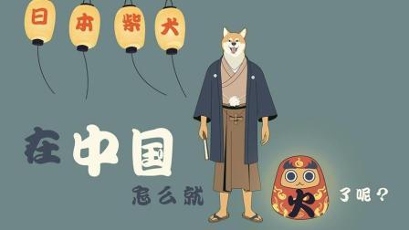 日本的柴犬怎么就在中国火了呢?