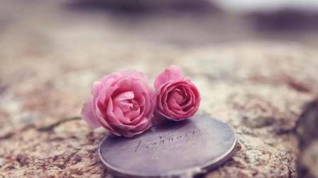 七夕情人节到了, 你收到玫瑰了吗? 看看属于你的玫瑰花语!