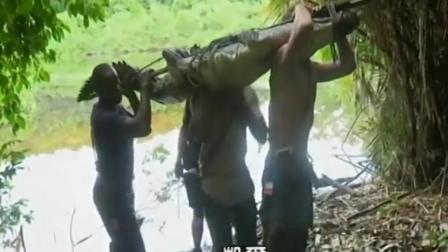 贝爷的孤岛求生: 抓到一只大鳄鱼烤了吃了, 士气大震!