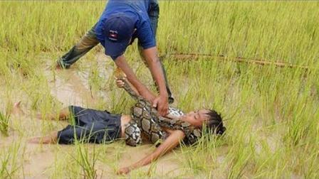 两个男孩蓄水池中游泳, 发现水田中有一条大蟒蛇, 他们竟然这样做