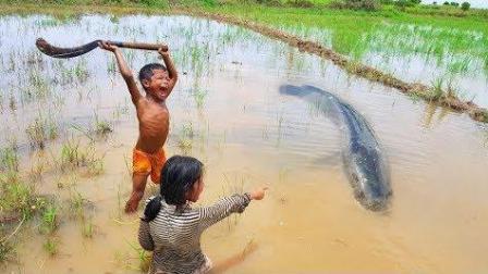农村姐姐和弟弟水田叉鱼, 姐姐拿木棍弟弟拿镰刀, 15分钟五六条鱼