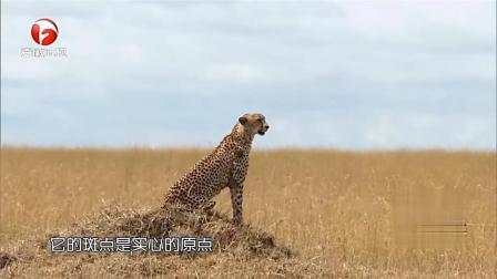 杜海涛幸运爆表遇猎豹,帅哥尹正都要被感动哭了