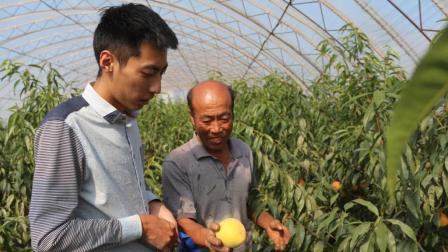 不得不尝, 农村大叔家种锦绣黄桃比罐头好吃一百倍!