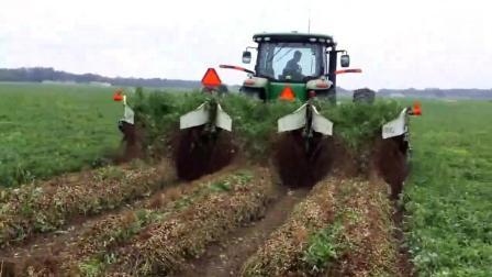 德国收割机收花生, 挖完还翻过来, 这机械化太牛了
