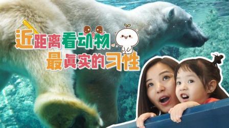 日本人用一招 改变一座动物园 87