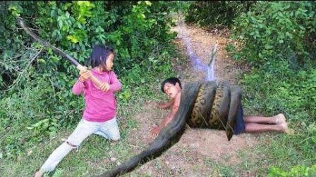 农村俩姐弟捕蛇高手, 简易粘网做陷阱, 捕到了一条大蟒蛇