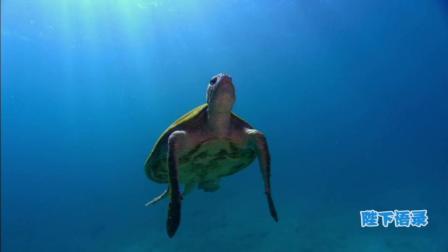 讲述一个你不知道的深海, 海洋传奇3